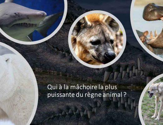 Quelques animaux avec une mâchoire puissante : crocodile, requin, hippopotame, hyène, loup ...
