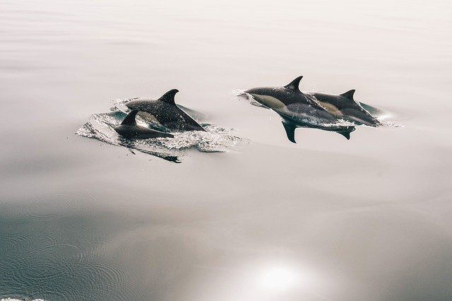 un groupe de dauphin