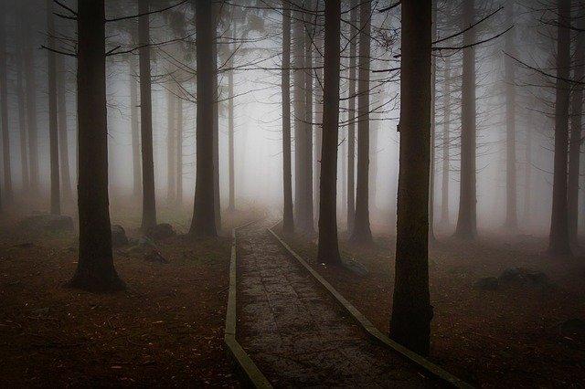 des pins (arbres)