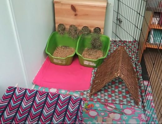 Idées d'aménagements pour cages à lapins nains 6