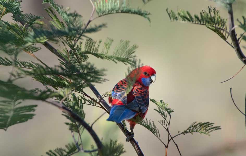 Une perruche sur une branche d'arbre